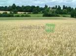 Teren agricol Periferie