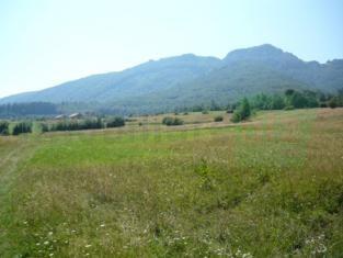 teren Tohanita Bran